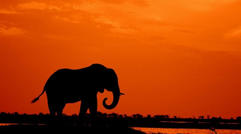 Elefánt, mint erőállat